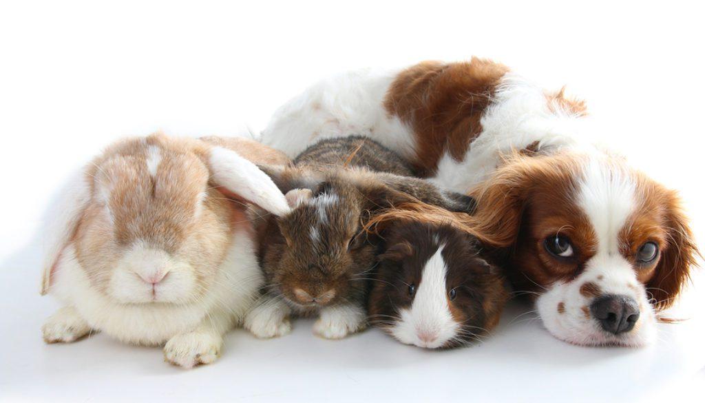 animal hospital website design